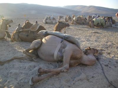 Camelsback