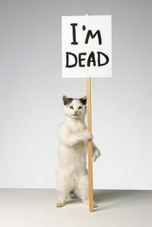 Dead_cat